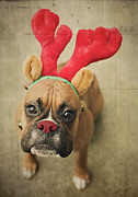 Headband Metal Prints - Funny Boxer Puppy Metal Print by Jody Trappe Photography