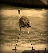River View Pyrography Prints - Funny Flamingo Print by Radoslav Nedelchev
