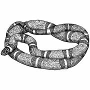 Reptiles Drawings Prints - Fursnake Print by Karl Addison