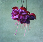 Vibrant Metal Prints - Fuschia Flower Metal Print by Kim Hojnacki
