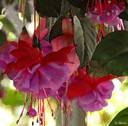 Fuschia Mixed Media Prints - Fuschia Flowers Print by AZ Group
