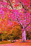 Fuschia Posters - Fuschia Tree Poster by Nadine Rippelmeyer