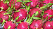 Fushia Metal Prints - Fushia Fruit Metal Print by Douglas Barnett