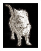 Cute Dogs Drawings Framed Prints - Fuzzy Molly Framed Print by Jack Pumphrey