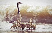 Goose Metal Prints - Gaggle Metal Print by Photogodfrey