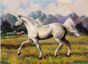 Custom Horse Portrait Prints - Gai Adventure    Arabian Stallion  Horse Painting Print by JoAnne Corpany