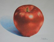 Color Pencil Drawings - Gala by Pamela Clements