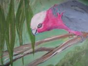 Joanne Seath - Galah