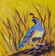 Summer Celeste Metal Prints - Gamble Quail Metal Print by Summer Celeste
