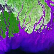 River Flooding Posters - Ganges Delta Poster by Nasa