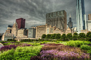 City Garden Prints - Garden Amongst the Urban Sky Scrapers of Chicago Print by Noah Katz
