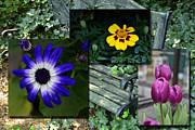 Garden Bench Print by Larry Bishop