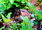 Cute Bunny Framed Prints - Garden Bunny Framed Print by Nick Gustafson