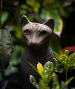 Big Island Prints - Garden Cat Print by Mike Reid