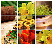 Horticultural Photo Posters - Garden collage Poster by Sandra Cunningham
