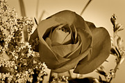 Rose Flower Greeting Cards Photos - Garden Delight Sepia Tone by M K  Miller