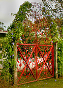 Anton Photos - Garden Gate by Dolly Sanchez