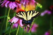 Butterfly On Flower Prints - Garden Jewelry Print by Lois Bryan