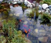 Carp Digital Art - Garden Koi Pond by Elaine Plesser