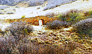 Abstract Expressionist Art - Garden of the Gods - Bridge Panorama by Lenore Senior