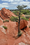 Colorado Springs Prints - Garden of the Gods  - The name says it all Print by Christine Till