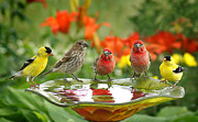 Birdbath Framed Prints - Garden Party Framed Print by Bill Pevlor