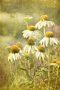 Coneflowers Prints - Garden Party Print by Reflective Moments  Photography and Digital Art Images