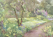 Daffodils Art - Garden Path by Mildred Anne Butler