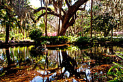 Garden Reflections Print by Bob and Nancy Kendrick