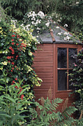 Wooden Shed Framed Prints - Garden Shed Framed Print by Archie Young