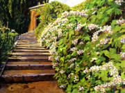 Blooming Bushes Prints - Garden Stairway Tuscany Print by David Lloyd Glover