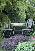 Hosta Sp. Photos - Garden Table And Chairs by Archie Young