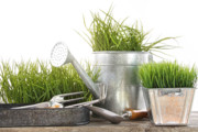 Ecology Art - Garden tools and watering can with grass by Sandra Cunningham
