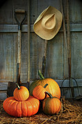 Orange Pumpkin Prints - Garden tools in shed with pumpkins Print by Sandra Cunningham