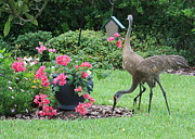 Cranes Prints - Garden Visitors Print by Carol Groenen