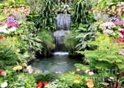 Gardens Framed Prints - Garden Waterfall Framed Print by Carol Groenen