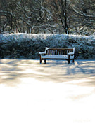 Christopher Arndt Framed Prints - Garden Winter Solitude Framed Print by Christopher Arndt