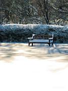 Christopher Arndt - Garden Winter Solitude