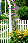 Lilies Prints - Garden with picket fence Print by Elena Elisseeva