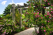 Trellis Framed Prints - Garden with roses Framed Print by Elena Elisseeva