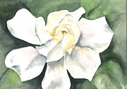 Kimberly Lavelle - Gardenia for Cynthia