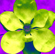 Linnea Tober - Gardenia in lime and...