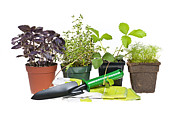 Gardening Plants Posters - Gardening tools and plants Poster by Elena Elisseeva