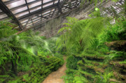 Fern Originals - Garfield Park Conservatory Path Chicago by Steve Gadomski