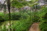 Conservatory Prints - Garfield Park Conservatory Pond And Path Chicago Print by Steve Gadomski