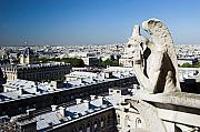 Guardian Angel Photo Posters - Gargoyle guarding the Notre Dame Basilica in Paris Poster by Pierre Leclerc