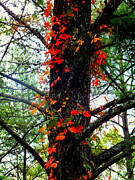 Great Smokey Mountains Prints - Garland of Autumn Print by Karen Wiles