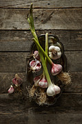 Y120817 Art - Garlic by Lew Robertson