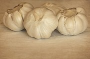 Fresh Food Originals - Garlic by Sophie Vigneault