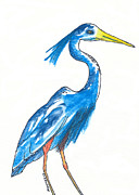 Blue Heron Drawings Prints - Garza Azul Print by Michael Mooney